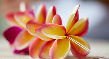 lei-making-yellow-red